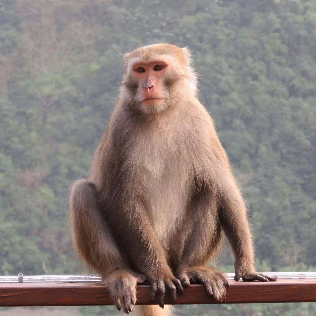 Speaker 林阿猴's avatar